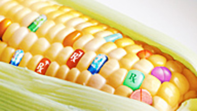 inside cornell the misconceptions and concerns about gmos cornellcast