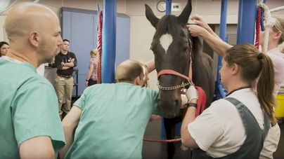 Veterinary cardiologists offer advanced treatment for horses with atrial  fibrillation - CornellCast