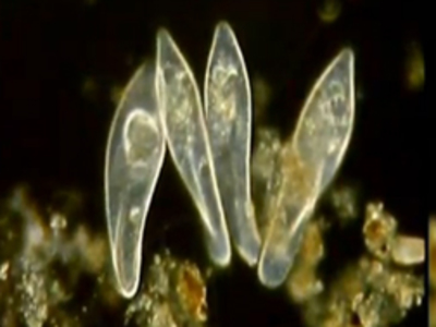Films Media Group - Sexual and Asexual Reproduction