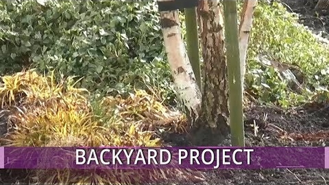 Thumbnail for entry My Backyard Project