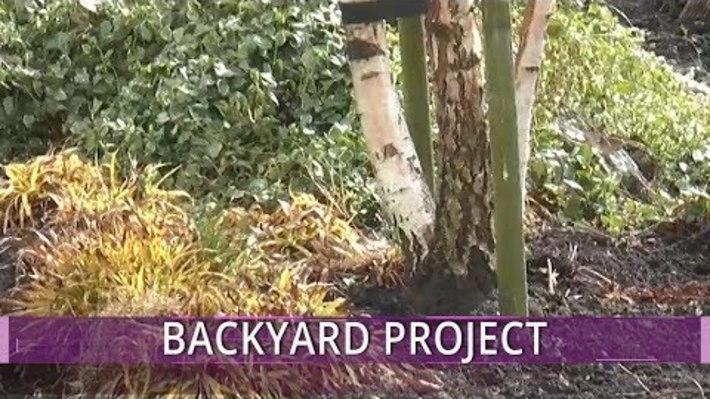 My Backyard Project