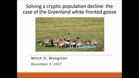 Thumbnail for entry NRES 500 Fall 2017 - Weegman - Solving a cryptic population decline: the case of the Greenland white-fronted goose