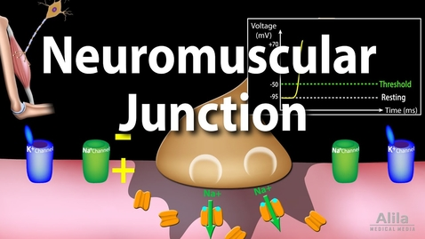 Thumbnail for entry Neuromuscular Junction, Animation