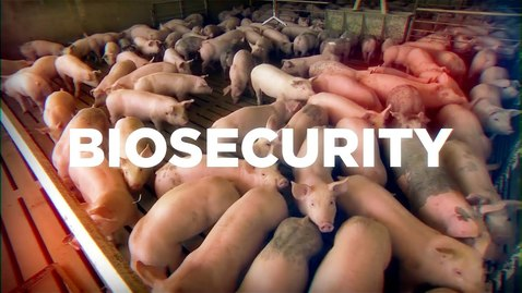 Thumbnail for entry Swine Biosecurity Training (VCM 561)