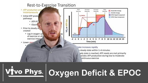 Thumbnail for entry Oxygen Deficit and Excess Post Exercise Oxygen Consumption EPOC - VO2 Kinetics