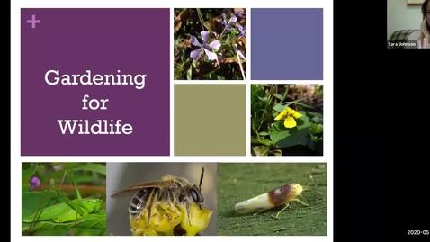 Thumbnail for entry Outdoor Wellness: Gardening for Wildlife