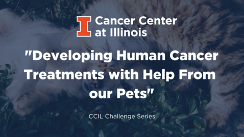 Thumbnail for entry Developing Human Cancer Treatments with Help From Our Pets