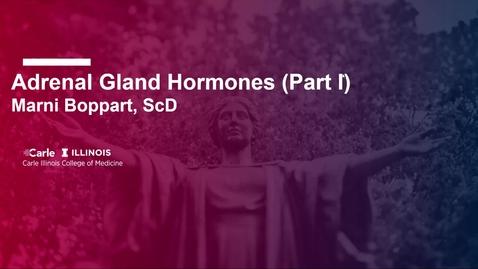 Thumbnail for entry Adrenal Gland Hormones TBL - Part I