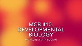 Thumbnail for entry MCB 410- Developmental Biology, Conversation with Dr. Rachel Smith-Bolton
