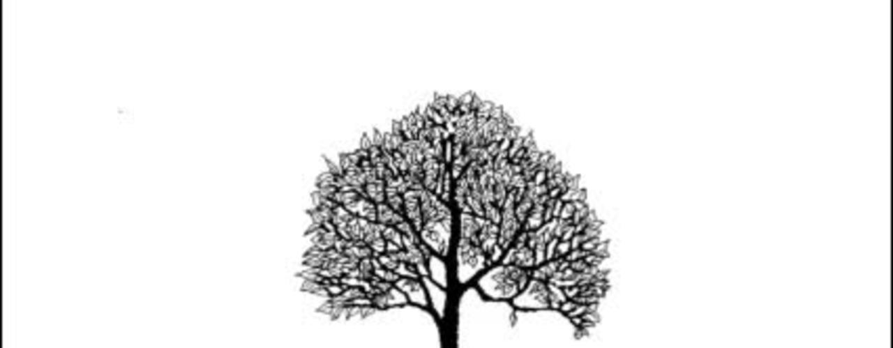 Pequea 6:  Root words