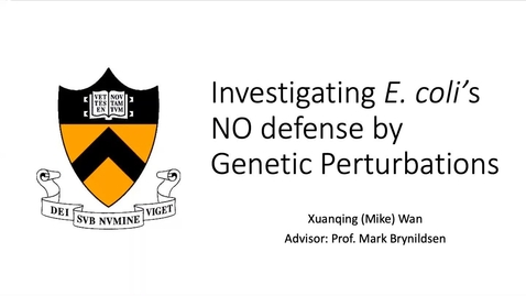 Thumbnail for entry Investigating E. coli's Nitric Oxide Defense by Genetic Perturbations