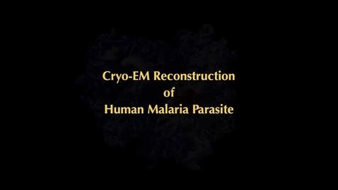 Thumbnail for entry Visualization of malaria molecule from Cryo-Electron Microscopy
