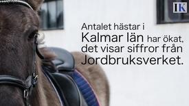 Hästar är populärt i Kalmar