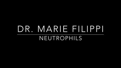 Thumbnail for entry Dr. Marie Filippi Neutrophils 1