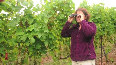 NW Wine Studies-Fruit Maturity Sampling-Part 2