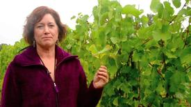 Thumbnail for entry NW Wine Studies-Identifying Magnesium Deficiency