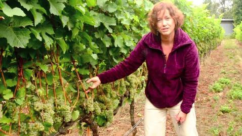 Thumbnail for entry NW Wine Studies-Fruit Maturity Sampling-Part 1