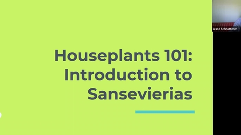 Thumbnail for entry Take 15-Houseplants 101: Introduction to Sansevierias