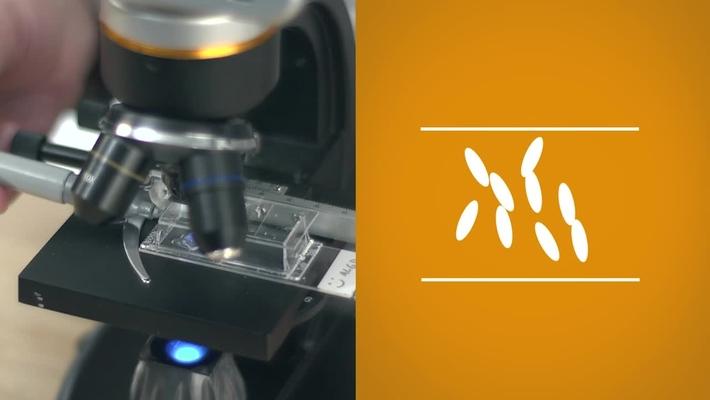 Liquid Crystals Sensors at UW-Madison MRSEC