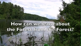 Thumbnail for entry Learning from the Forest