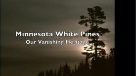 Thumbnail for entry Minnesota White Pine Story