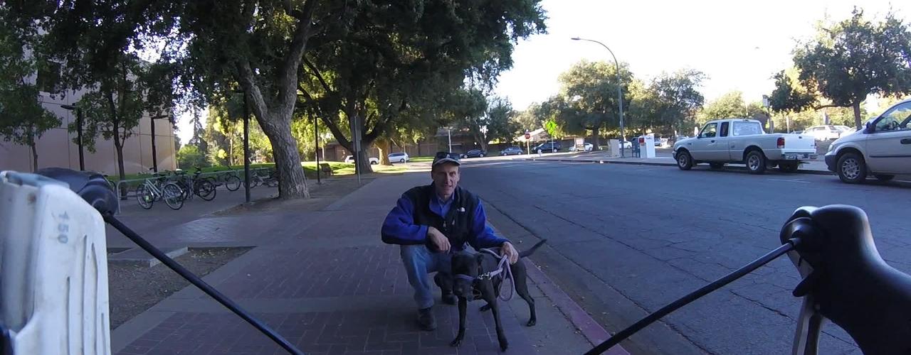 Dog'NDoc_meatlab