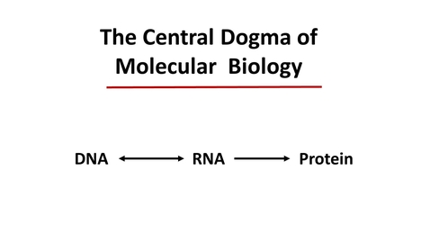 Thumbnail for entry Introduction to Central Dogma lecture