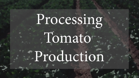 Processing Tomato Production (for class).mp4