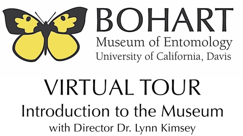 Thumbnail for entry Bohart Museum of Entomology Virtual Tour: Introduction to the Museum (Dr. Lynn Kimsey)