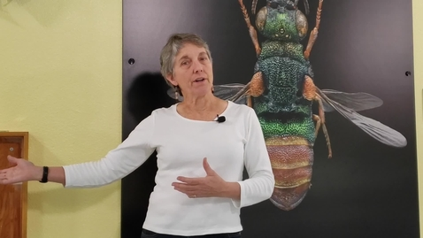 Thumbnail for entry ENT 001 Bohart Museum of Entomology Virtual Tour: Introduction with Director Dr. Lynn Kimsey