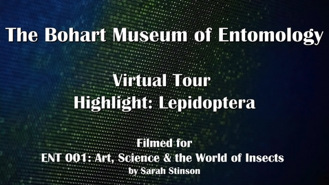 Thumbnail for entry ENT 001 Bohart Museum of Entomology Virtual Tour Highlight: Lepidoptera Collection (Dr. Diane Ullman)