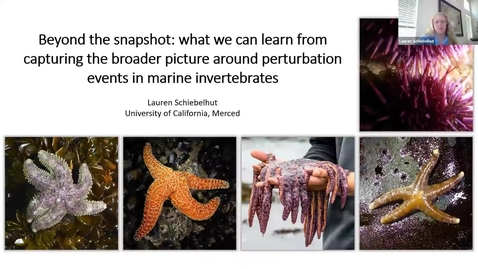 Thumbnail for entry BML - Dr. Lauren Schiebelhut: Beyond the snapshot: what we can learn from capturing the broader picture around perturbation events in marine invertebrates