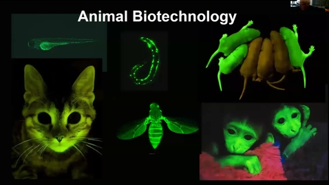 Thumbnail for entry Animal biotechnology 1 Lecture