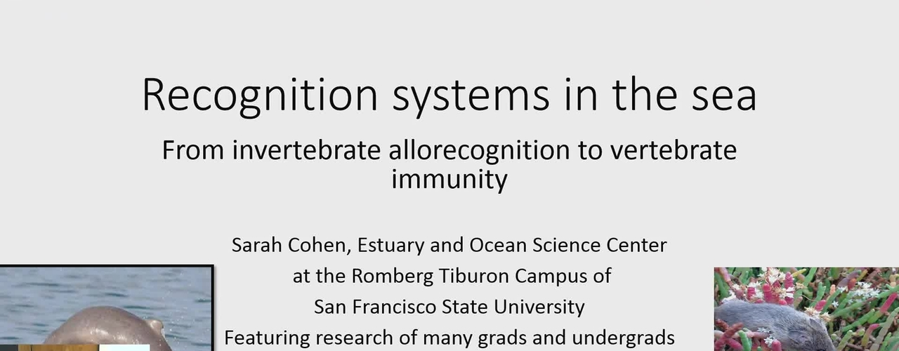 BML - Sarah Cohen: Recognition systems in the sea