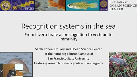 Thumbnail for entry BML - Sarah Cohen: Recognition systems in the sea