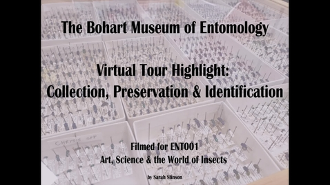 Thumbnail for entry ENT 001 Bohart Museum of Entomology Virtual Tour Highlight: Insect Collection, Preservation and Identification (Dr. Steve Heydon)