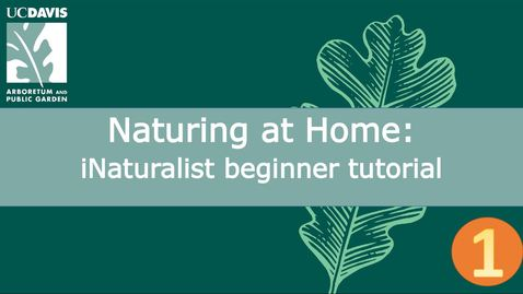 Thumbnail for entry Naturing at Home: iNaturalist beginner tutorial | Part 1 of 3