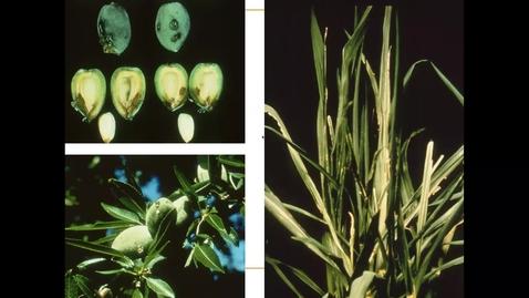 Thumbnail for entry April 10 SSC109 Basic Soil Plant Relationships (Part 3)