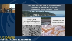 Thumbnail for entry BML - Jan Lovy: Understanding 'spill over' and 'spill back' of viral hemorrhagic septicemia at the interface of wild and farmed fish in British Columbia, Canada