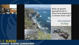 Thumbnail for entry BML - Chris Griesemer: RAD-seq-ing patterns in the sea