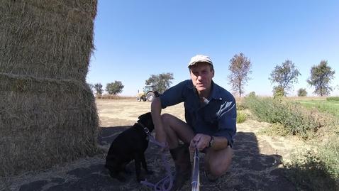 Dog'NDoc_#2Alfalfa_in_field