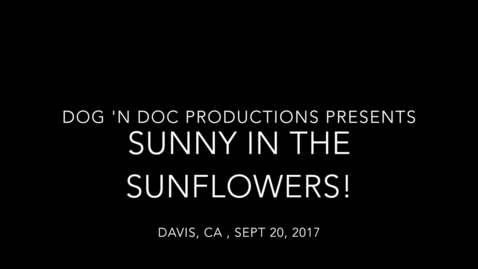 Thumbnail for entry Sunflower_Harvest_Sept2017