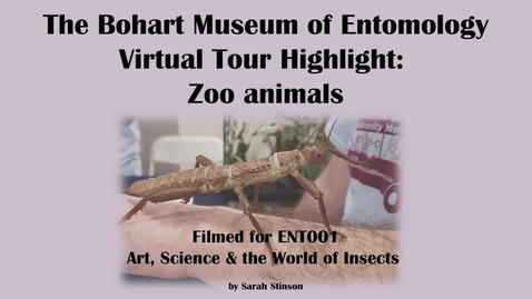 Thumbnail for entry ENT 001 Bohart Museum of Entomology Virtual Tour Highlight: Zoo Animals (Tabatha Yang and Dr. Lynn Kimsey)