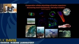 Thumbnail for entry BML - Martin Tresguerres: Comparative cellular physiology of marine organisms