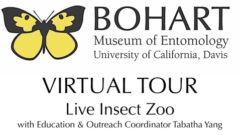 Thumbnail for entry Bohart Museum of Entomology Virtual Tour: Live Insect Zoo (Tabatha Yang & Dr. Lynn Kimsey)