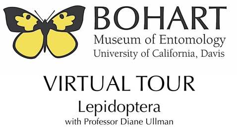 Thumbnail for entry Bohart Museum of Entomology Virtual Tour: Lepidoptera Collection (Dr. Diane Ullman)
