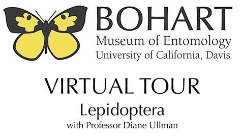 Thumbnail for entry Bohart Museum of Entomology Virtual Tour: Lepidoptera Collection (Dr. Diane Ullman)