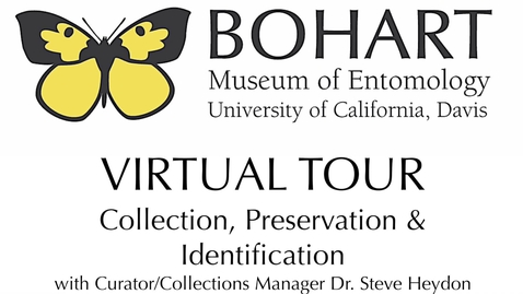 Thumbnail for entry Bohart Museum of Entomology Virtual Tour: Collection, Preservation & Identification (Dr. Steve Heydon)