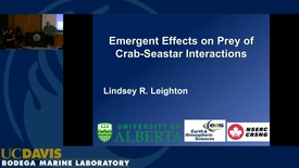 Thumbnail for entry BML - Lindsey Leighton: Emergent Effects on Prey of Crab-Seastar Interactions