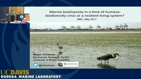 Thumbnail for entry BML - Mary O'Connor: Marine biodiversity in a time among humans